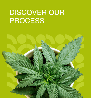 Discover our process